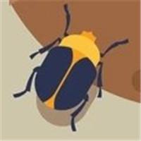 甲虫推便便