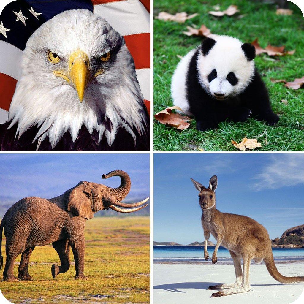 一起猜动物